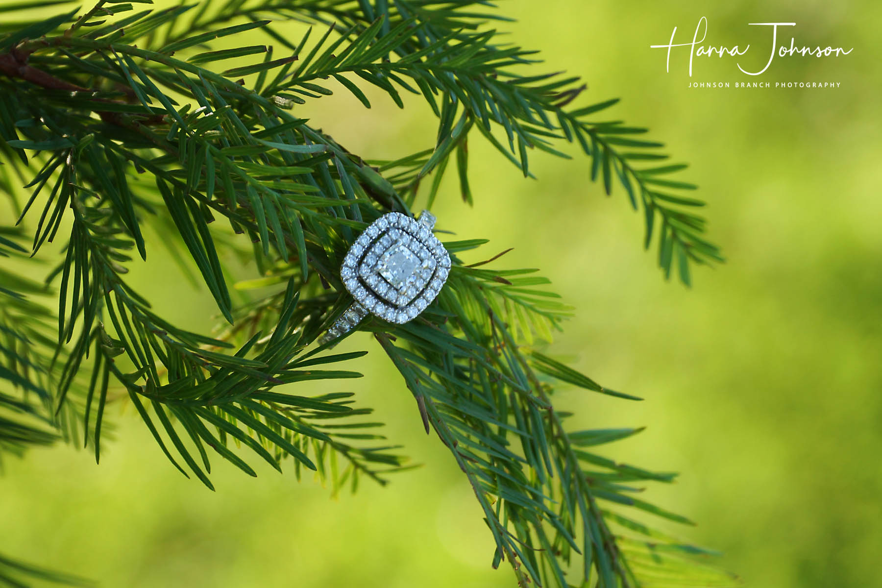 Beautiful ring photo on pine branch, Lexington, KY engagement photo session